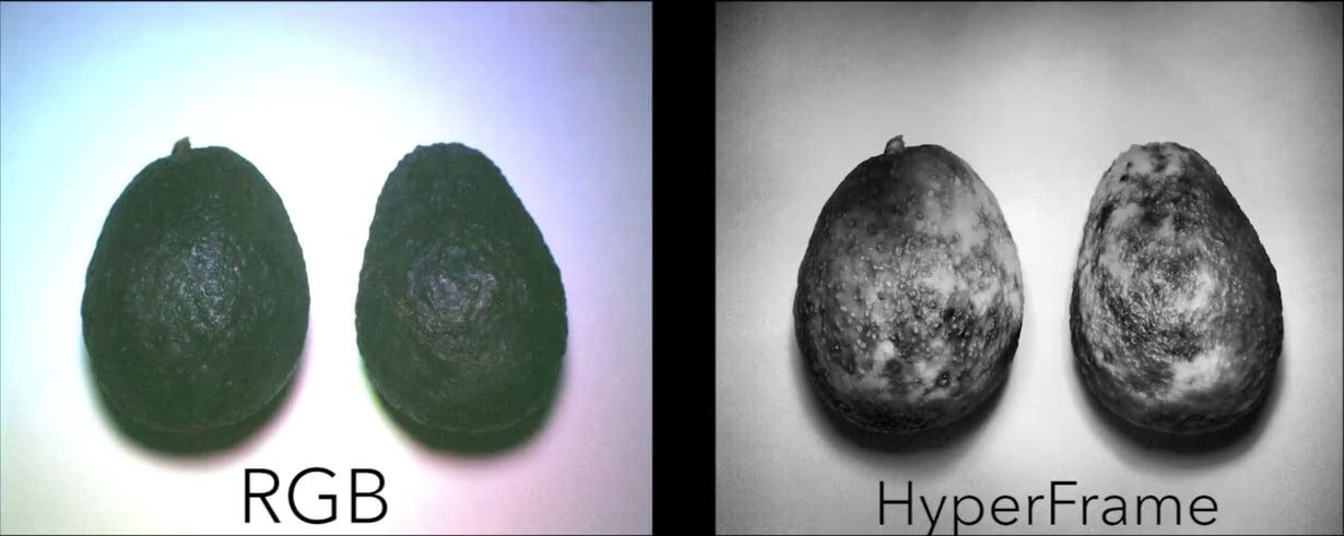 HyperCamilla voi tarkistaa, ovatko avokadot ja muut hedelmät raakoja, kypsiä vai mätiä. Kuva: University of Washington