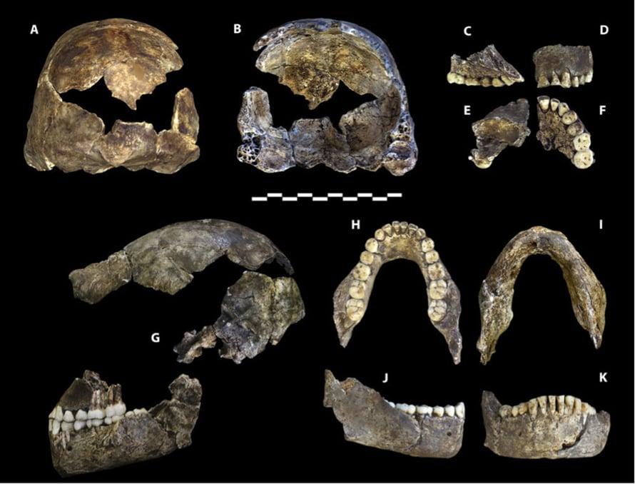 """Homo naledin jäänteitä. Kuva: <span class=""""photographer"""">Berger et al</span>"""