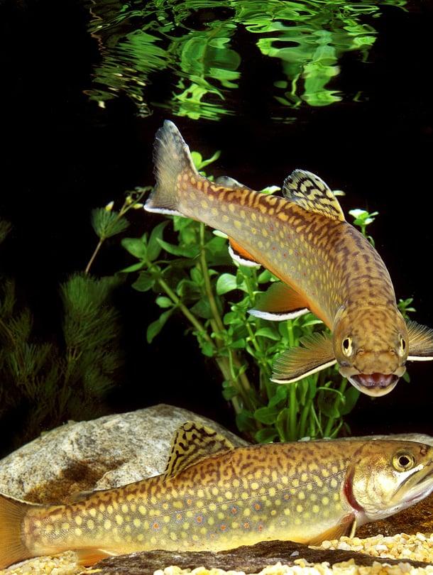 """Kalat välittävät tietoa äänten ja värien lisäksi myös paineaalloilla ja hajuilla. Kuva: <span class=""""photographer"""">Getty Images</span>"""