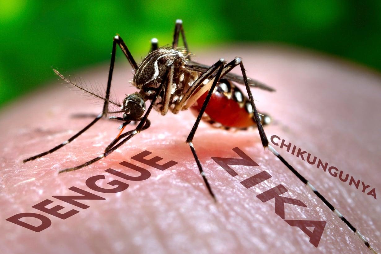 Hyttyssodan pääkohde on keltakuumehyttynen Aedes aegypti, joka levittää monia vakavia virustauteja. Kuva: Science Photo Library / MVPhotos