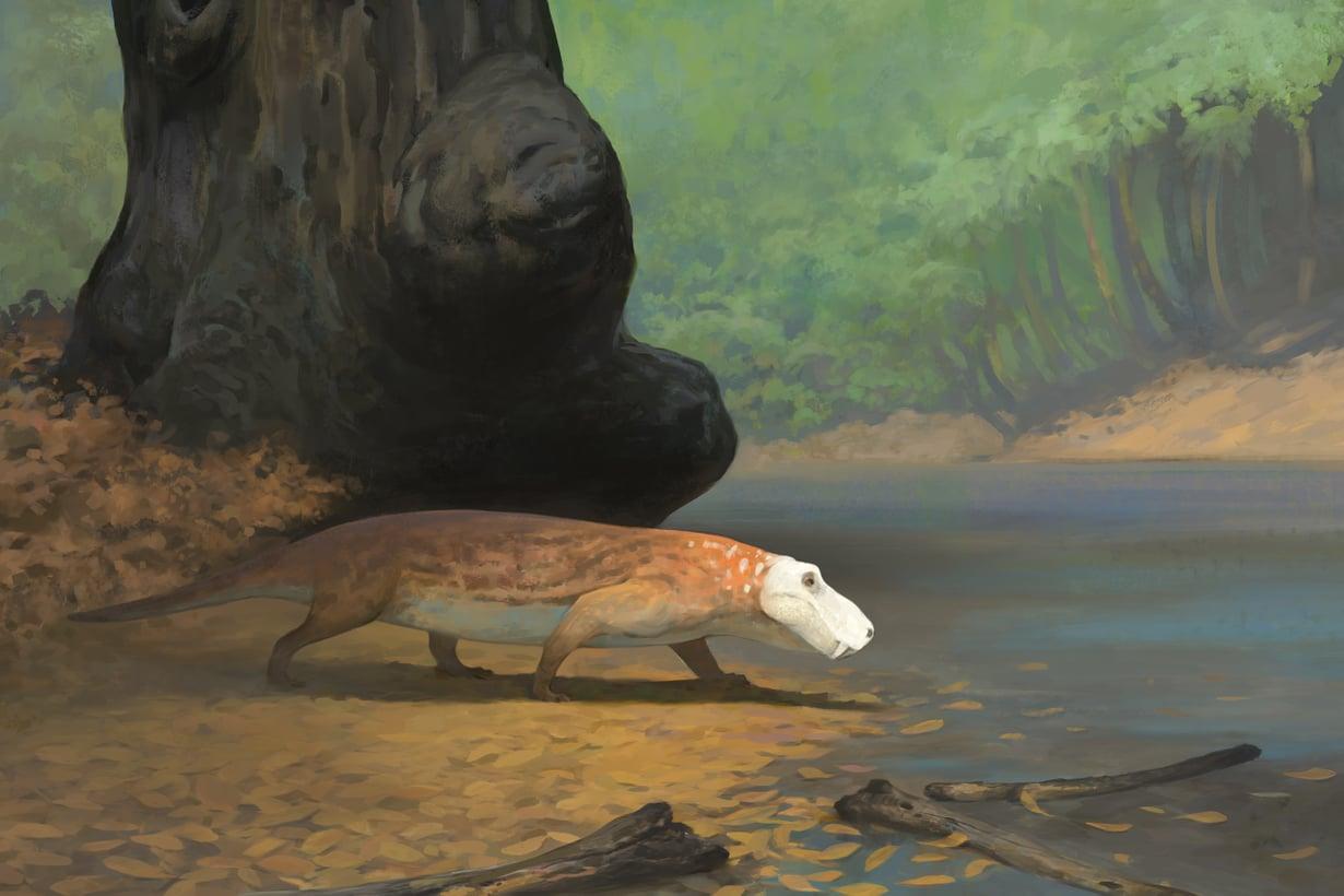 Permikauden gorgonopseista voimakkain lienee ollut Rubidgea, yli kolmimetrinen peto. Kuvitus: Ville Sinkkonen
