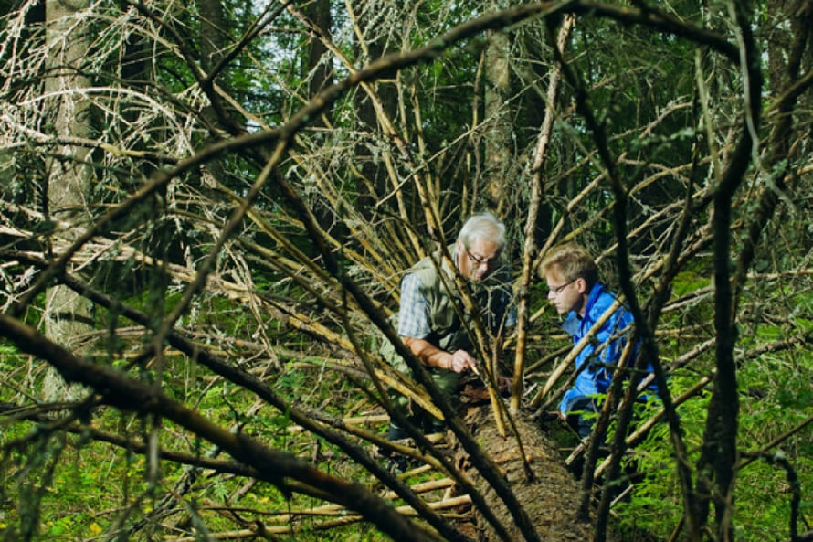 Metsäammattilaiset Seppo Repo  ja Pekka Jokinen katsastavat  tuulenkaadon asukkaat. Maatuminen  kestää 50 vuotta. Sinä aikana rungossa ehtii elää satoja lajeja.