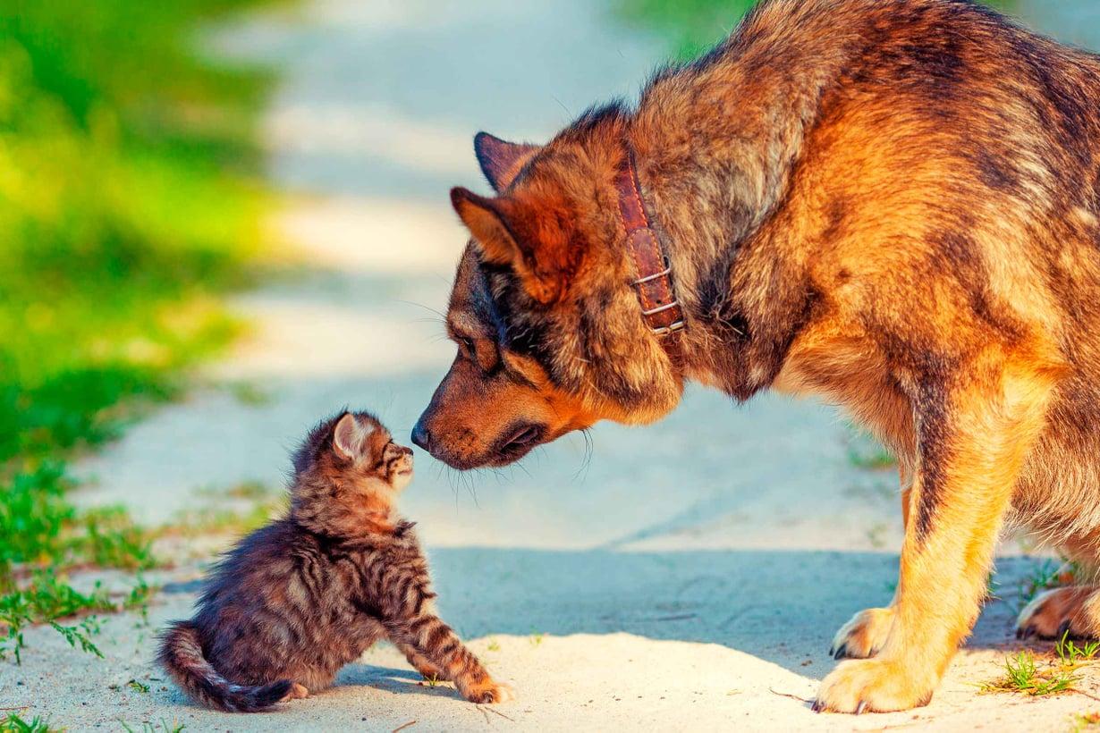 Kuvat Shutterstock