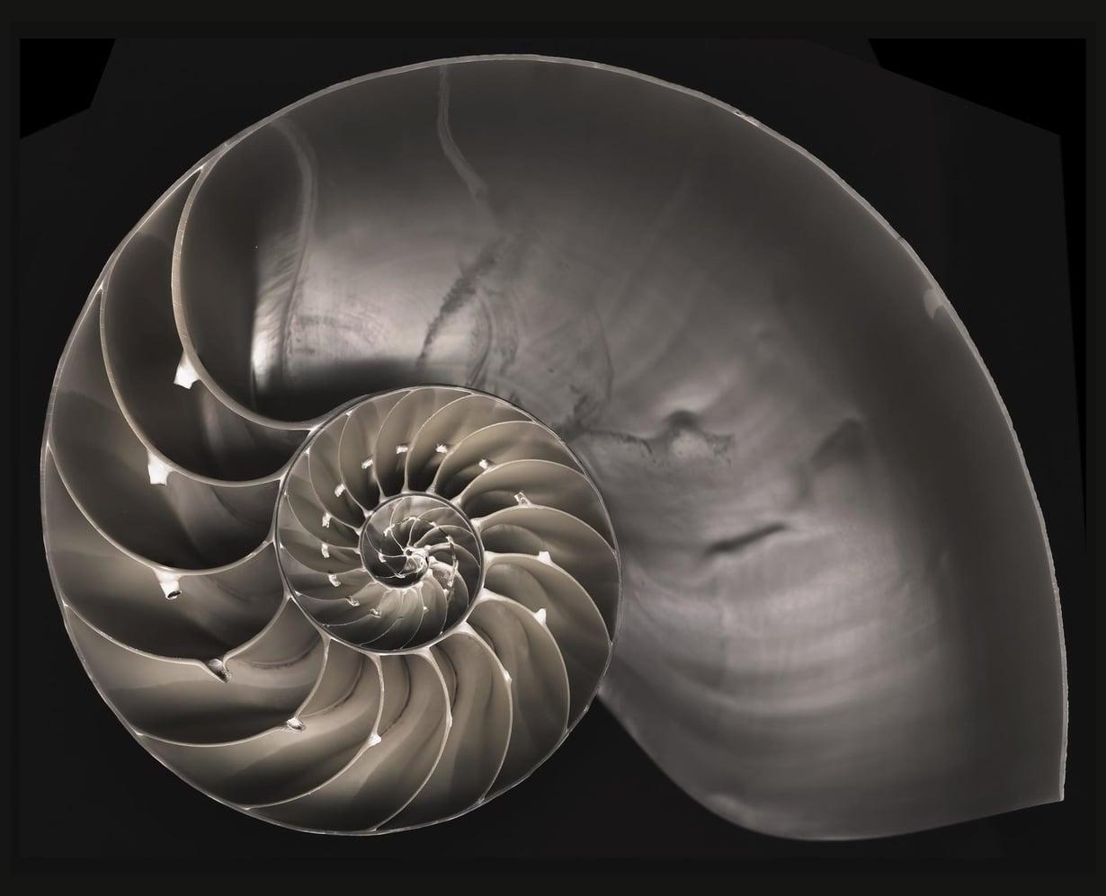 Kotilon rakenne noudattaa Fibonaccin sarjaa. Kuva: F. Martinez Clavel /SPL/MVPhotos