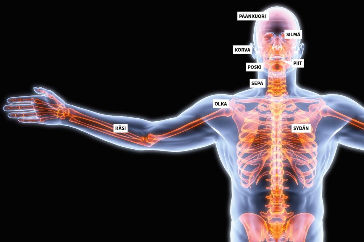 Uusia nimityksiä on haluttu myös tutuille asioille, kuten kehonosille.  Kuva: Shutterstock