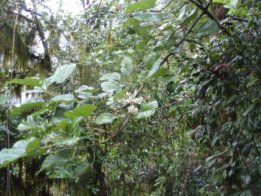 """Monimuotoisuutta ei tarvitse etsiä sademetsästä asti, ihminenkin on ekosysteemi. Kuva: <span class=""""photographer"""">Tuomas Aivelo</span>"""