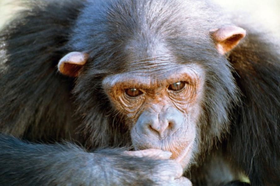 "Kuva: <span class=""photographer"">Max Planck Institute for Evolutionary Anthropology/Esther Herrmann</span>"