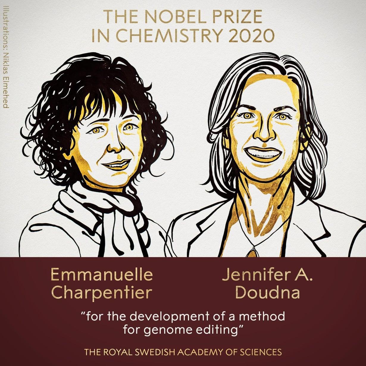 Nobelistit Emmanuelle Charpentier ja Jennifer Doudna kehittivät mullistavan keinon muokata eliöiden perimää. Kuva: Niklas Elmehed / Ruotsin kuninkaallinen tiedeakatemia