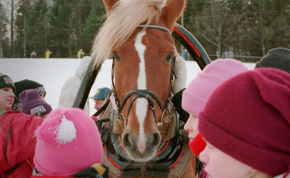 Hevosen vasen silmä on yhteydessä oikeaan aivopuoliskoon, joka käsittelee uhan ja vaaran tuntemuksia. Kuva: Timo Hämäläinen