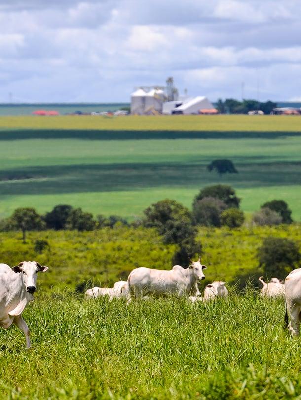 """Karjatalous kasvattaa päästöjä. Kuva: <span class=""""photographer"""">Getty Images</span>"""