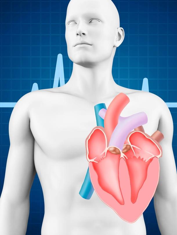 """Sian elimet kiinnostavat tutkijoita, sillä ne sopivat kooltaan ihmiselle. Sydämen lisäksi haluttaisiin keuhkot, munuaiset ja maksa. Kuva:  <span class=""""photographer"""">Getty Images</span>"""