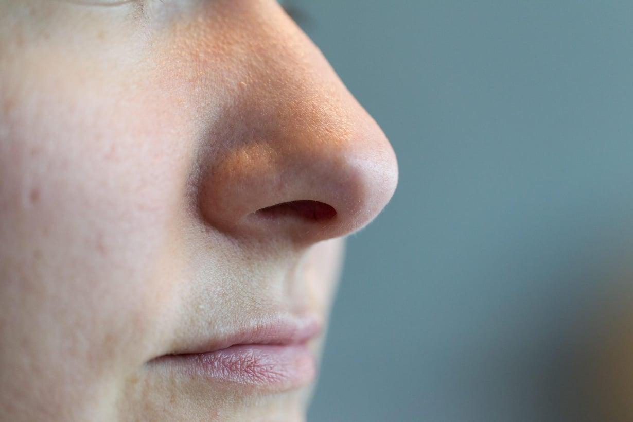 Nenän reseptorit aistivat hajujen lisäksi ilmanvirtaa. Kuva: Esa Syväkuru