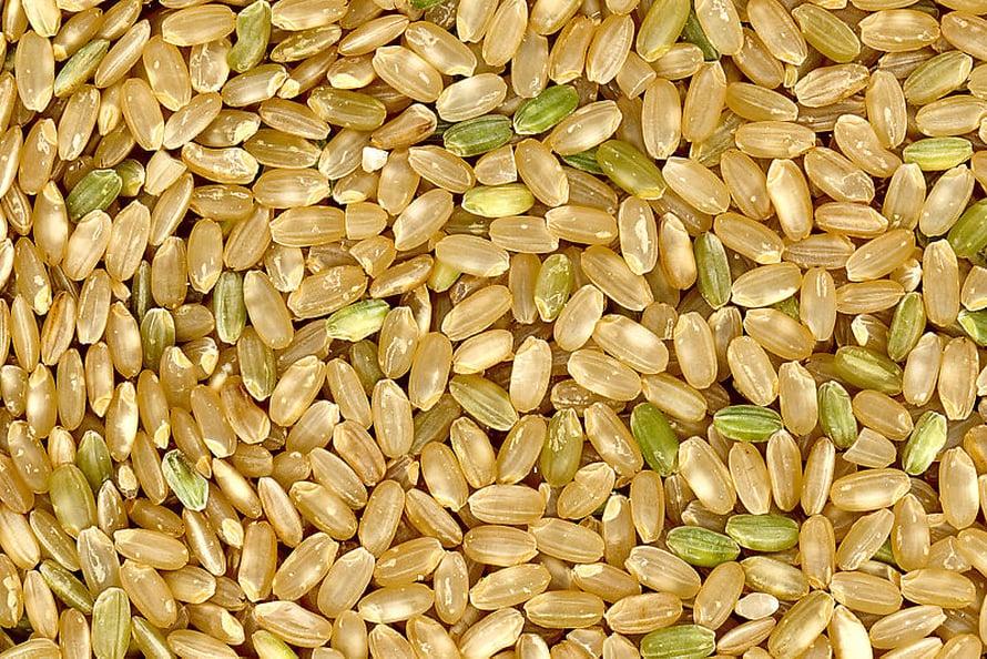 Tutkijoiden mukaan transgeeninen riisi voisi vastata kustannustehokkaasti albumiinipulaan. Kuvassa ruskeaa riisiä.