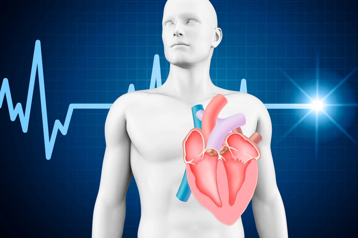 Sian elimet kiinnostavat tutkijoita, sillä ne sopivat kooltaan ihmiselle. Sydämen lisäksi haluttaisiin keuhkot, munuaiset ja maksa. Kuva:  Getty Images