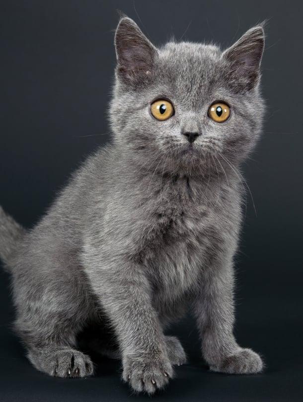 Silmät paljastavat: kissanpentu pelkää – tai on ainakin huolestunut.