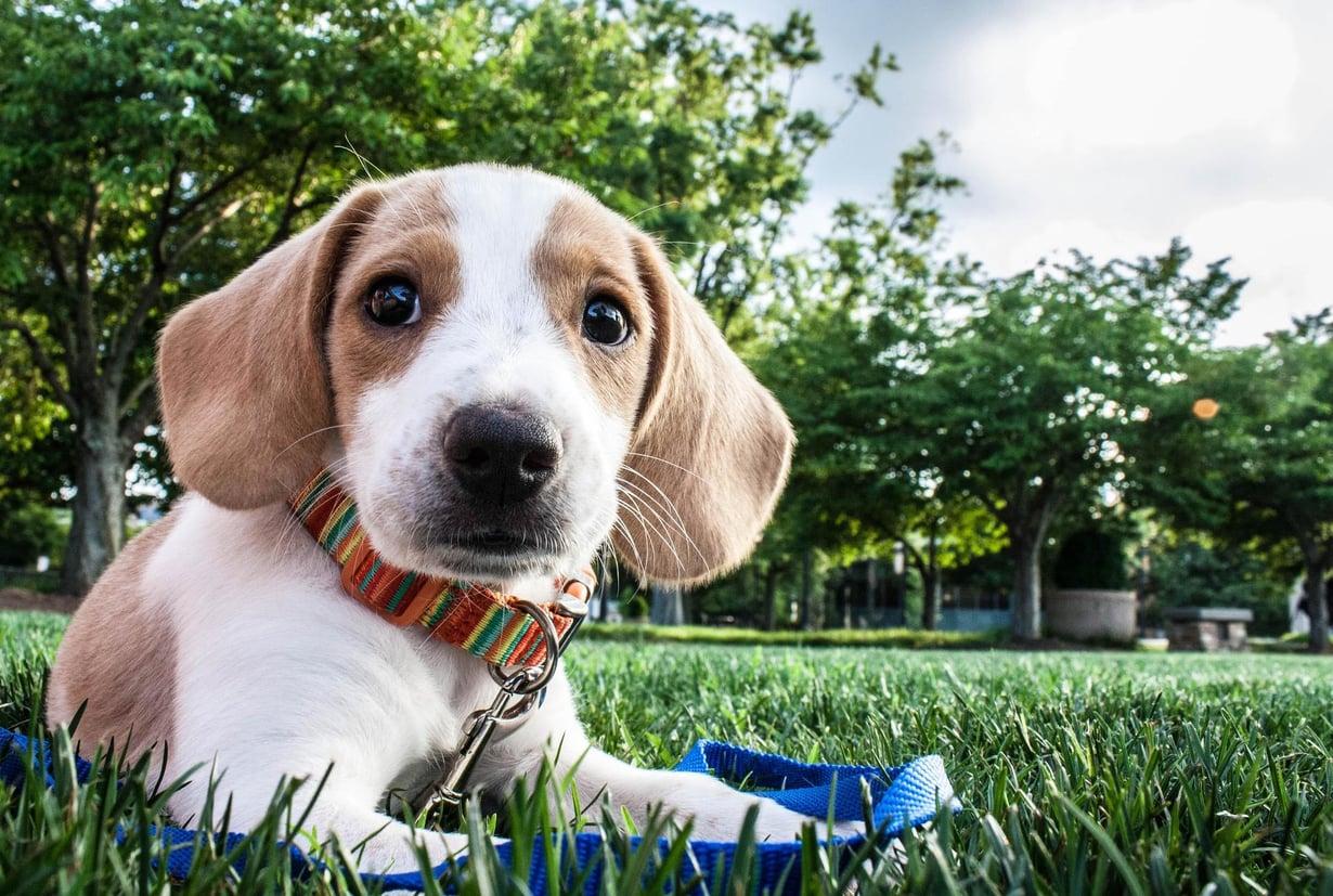 Surusilmä hellyttää. Kuva: Shutterstock