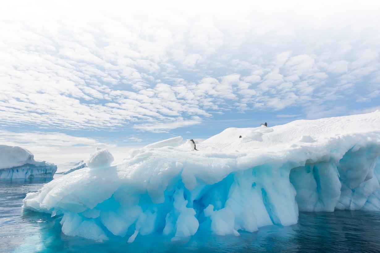Maailman suurimmassa jääerämaassa asuu vakituisesti pingviinejä, lentäviä lintuja ja hylkeitä. Väliaikaisesti siellä työskentelee tuhansia tutkijoita setvimässä napamantereen oloja. Kuva: Getty Images