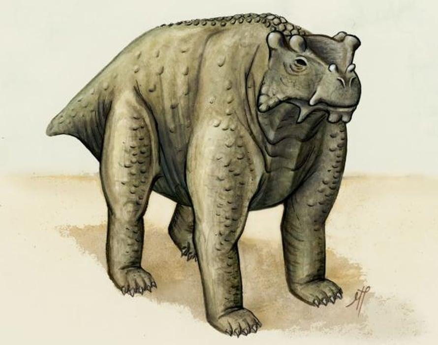 """Bunostegos akokaensis oli suunnilleen lehmän kokoinen. Kuva: <span class=""""photographer"""">Morgan Turner</span>"""