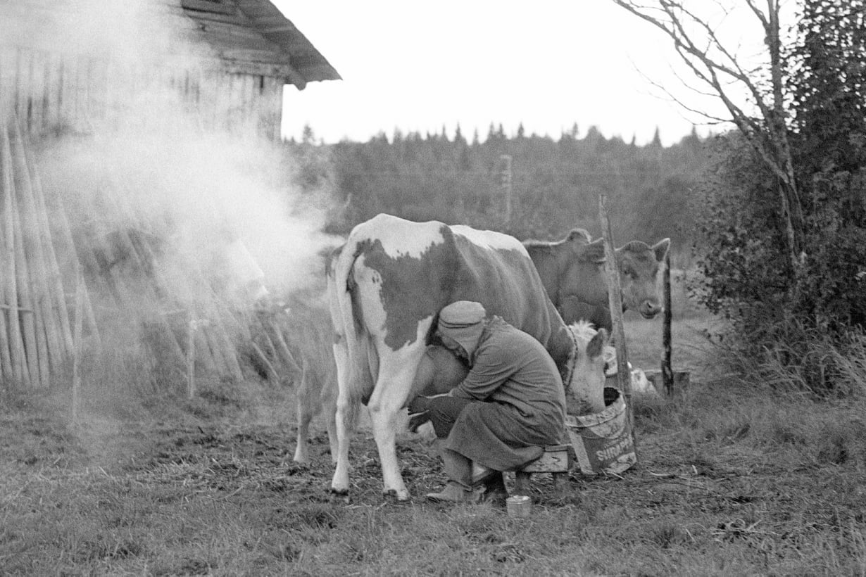 Entisajan emännillä oli keinonsa lypsyrauhan luontiin: lehvisavu piti kiusanhenget loitolla. Kuva: Teppo Lipasti / Lehtikuva