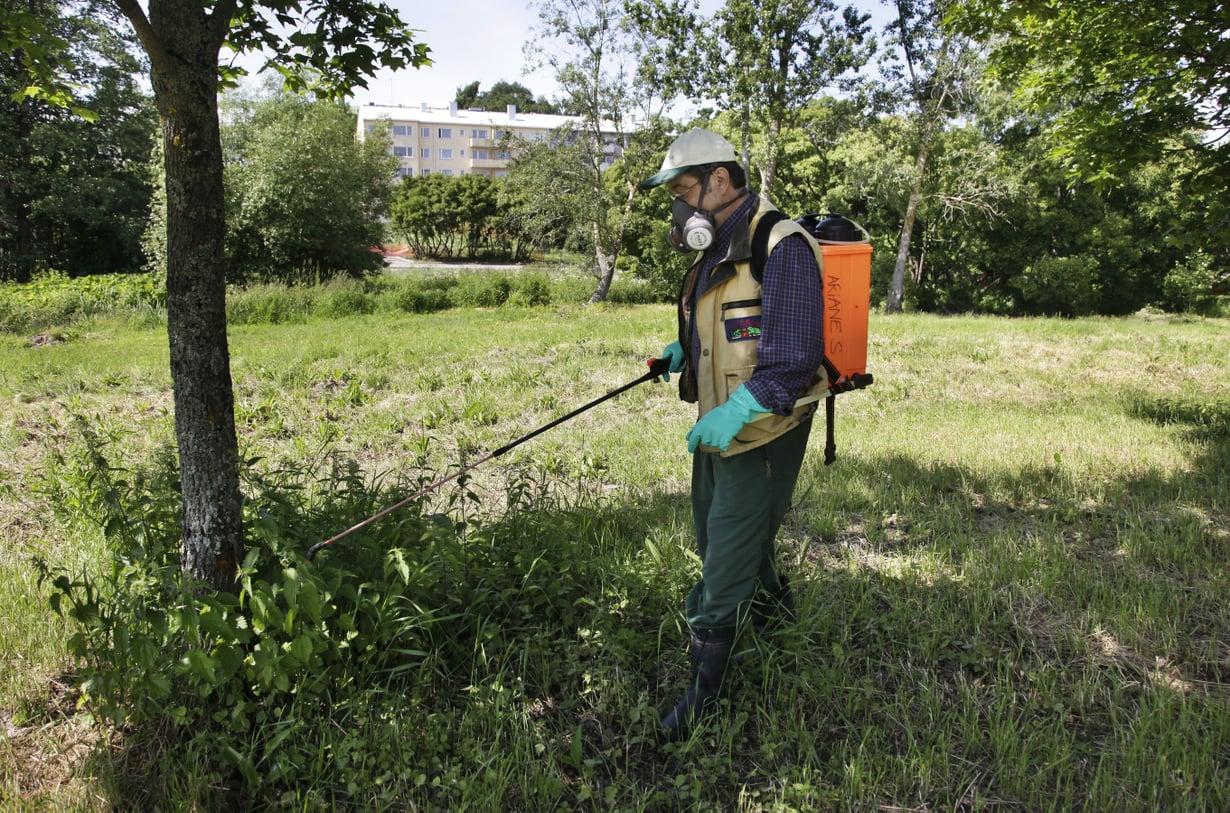 Glyfosaattia ruiskutetaan helsinkiläisessä puistossa kesällä 2011. Kuva: Christian Westerback / HS
