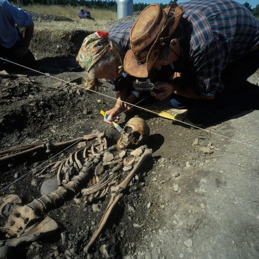Gotlannista kaivetut kivikautiset luurangot tarkentavat maanviljelyn historiaa.