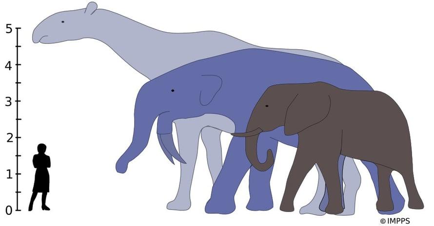 Suurimmat koskaan eläneet maanisäkkäät, Indricotherium ja Deinotherium olisivat jättäneet nykyisen savanninorsun.