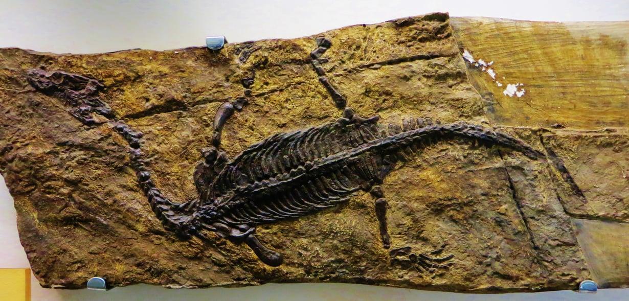 Merimatelija Lariosaurus balsami eli triaskaudella, joka päättyi 201 miljoonaa vuotta sitten. Kuva: Ghedoghedo, Wikimedia Commons