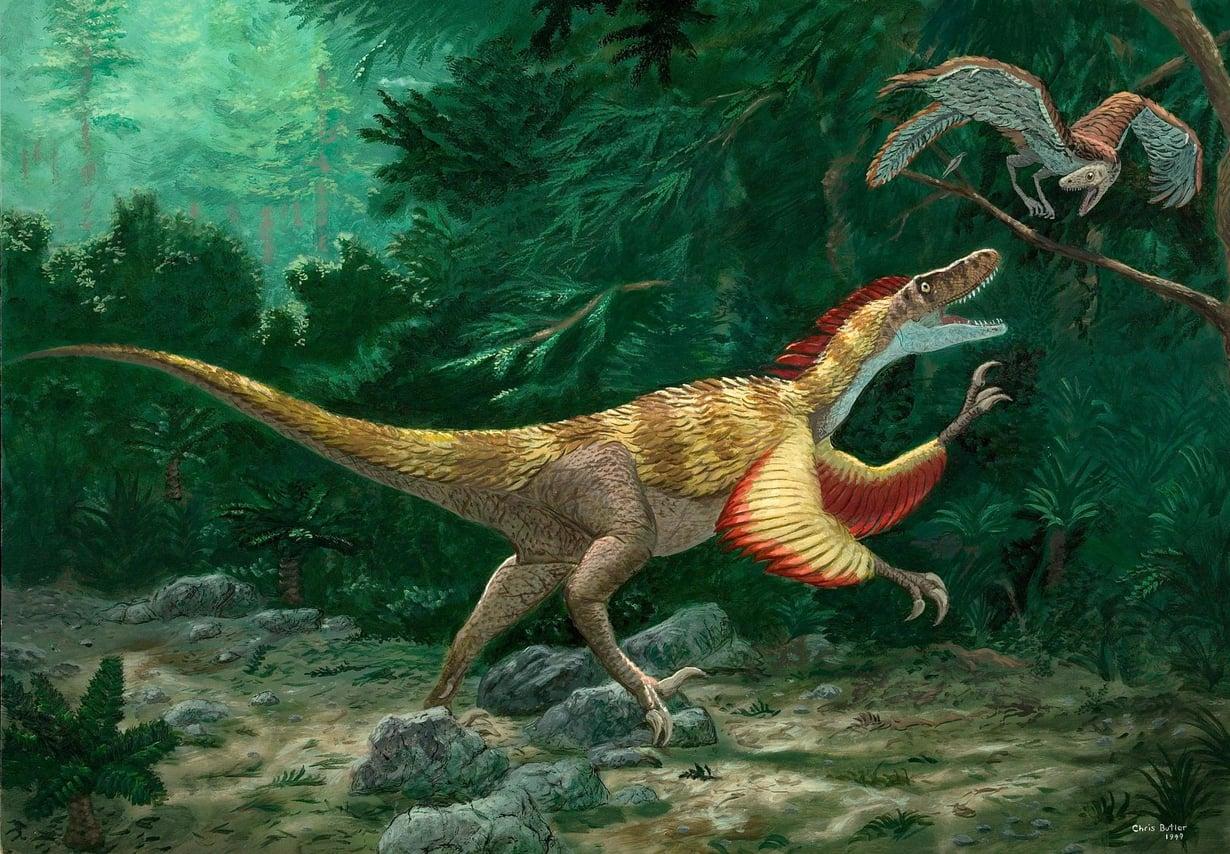 Dinosaurusfossiilin jalat muistuttivat kuvassa olevan Velociraptor-dinosaurussuvun jalkoja. Kuva: CHRISBUTLER / SCIENCE PHOTO LIBRARY