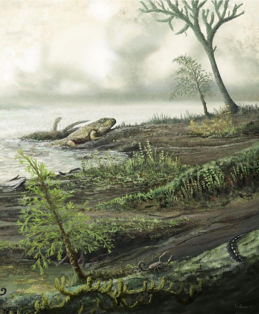 """Taiteilijan näkemys elämästä meren ja maan rajalla 335 miljoonaa vuotta sitten. Tämä taksi kuljetti bakteeritkin maalle. Kuva: <span class=""""photographer"""">Mark Witton</span>"""