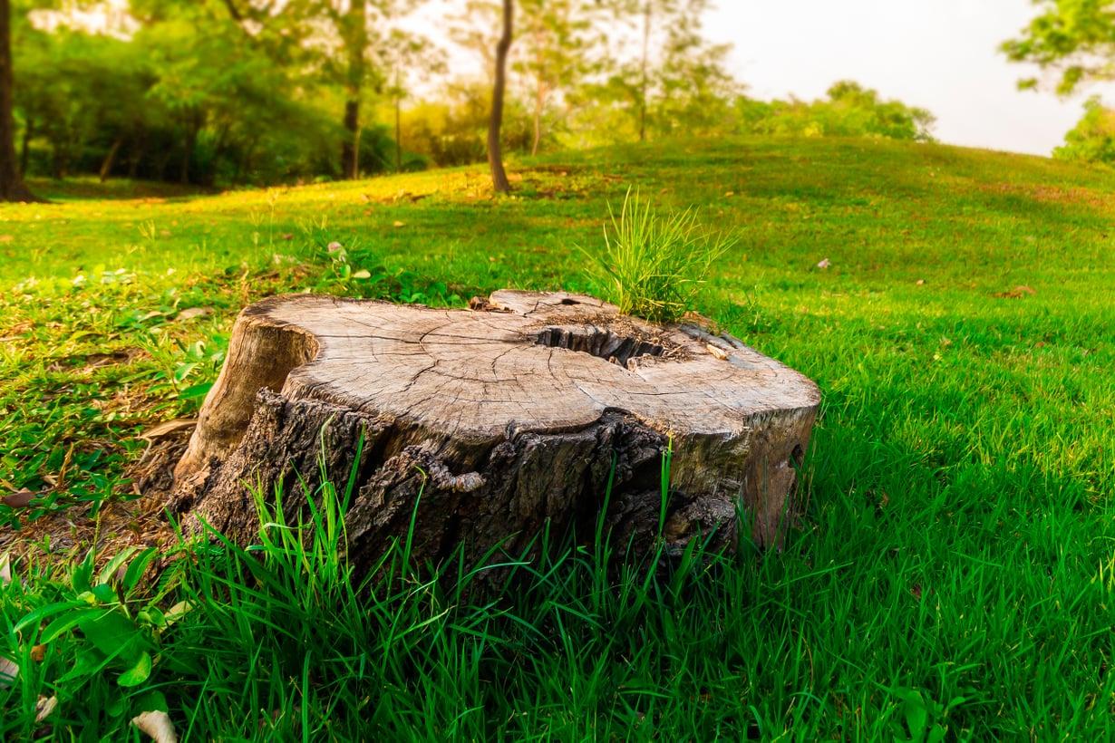 Juuriyhteydet pitävät hengissä pitkään. Kuva: Shutterstock