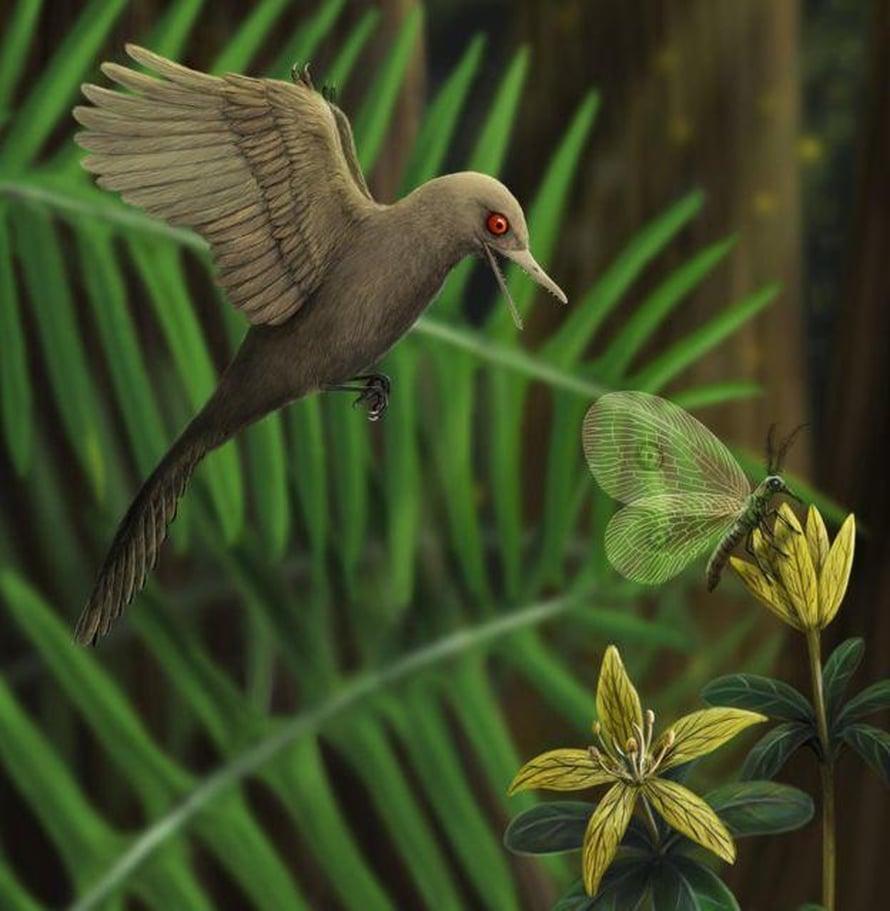 """Oculudentavis khaungraae oli kolibrin kokoa mutta silti se oli saalistaja. Taiteilijan näkemys. Kuva: <span class=""""photographer"""">Han Zhixin</span>"""