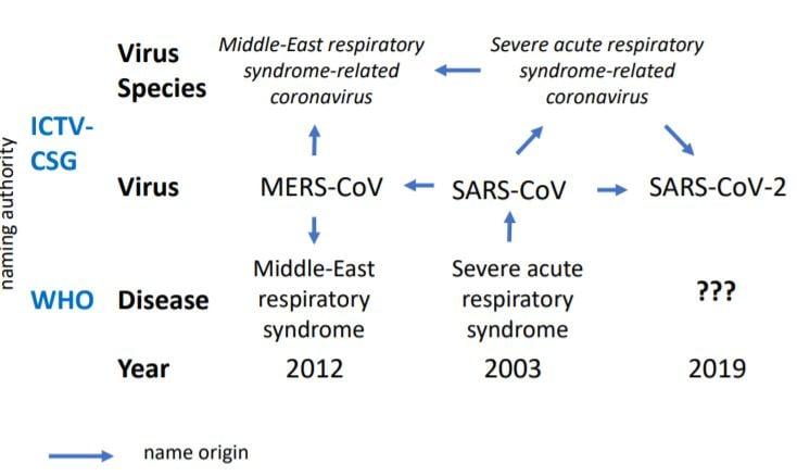 Kuvaaja ihmisillä vakavaa tautia aiheuttajien koronavirusten ja niiden tautien välisestä suhteesta.