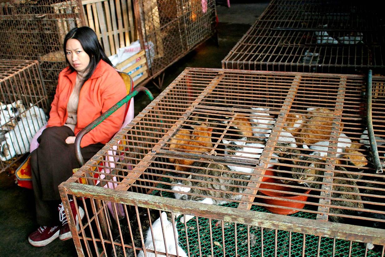Itä-Aasian eläintorien tautiriskien takia joissakin maissa on kartettu kaikkia kiinalaisia. Kuva: Getty Images
