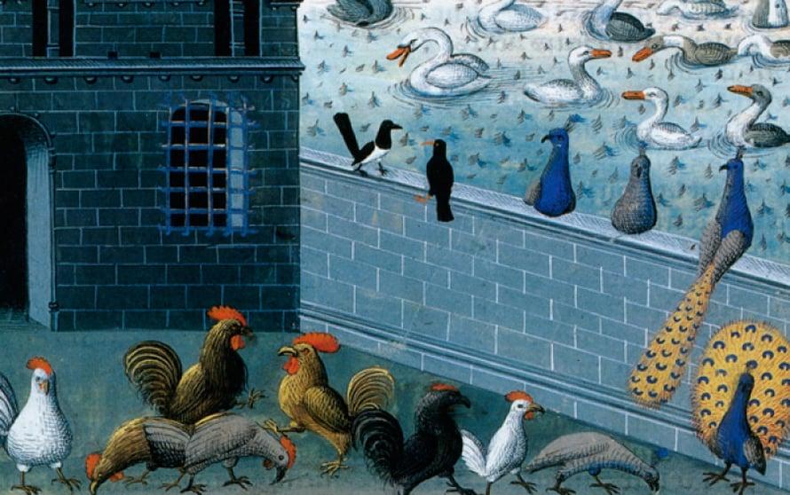 Kana päätyi ensimmäisenä pataan, jos ruoasta tuli pulaa.