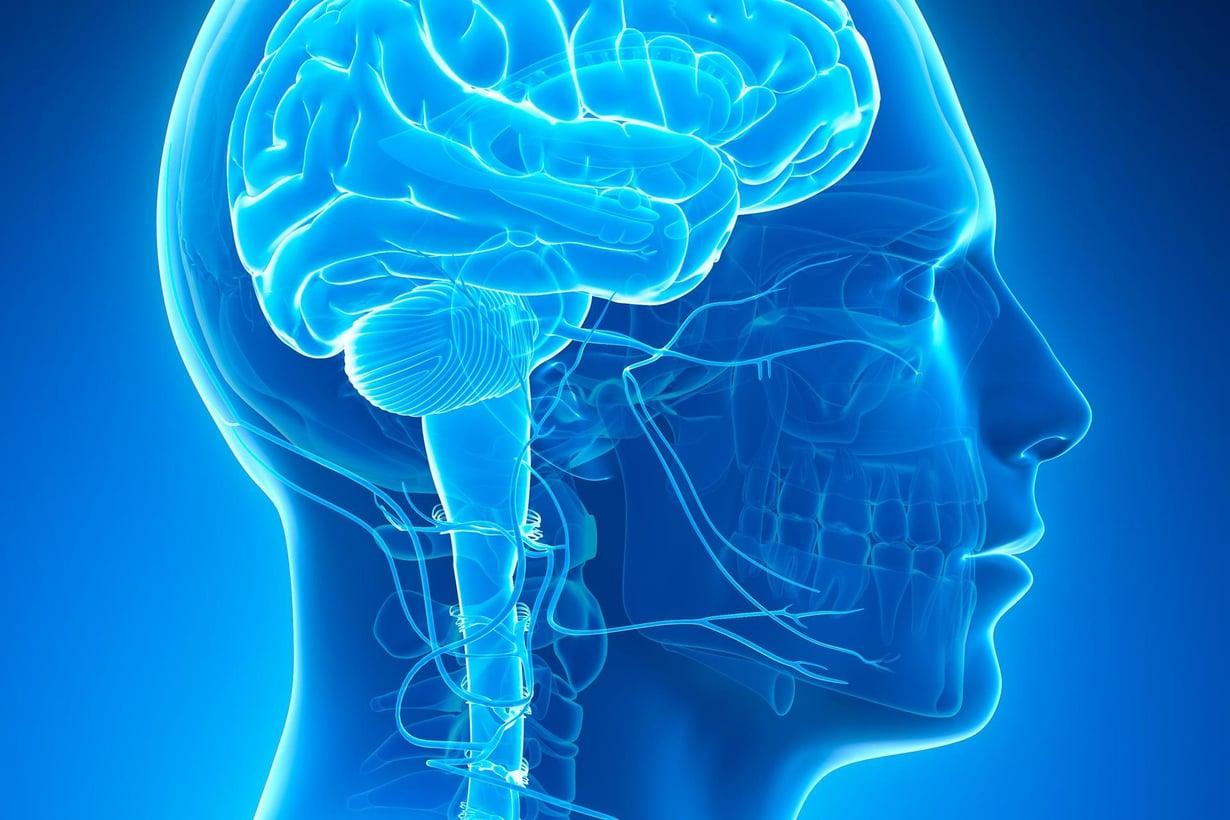 Aivojen takaosassa oleva näkökeskus jatkaa kehitystään paljon pidempään kuin on luultu. Kuva: Shutterstock