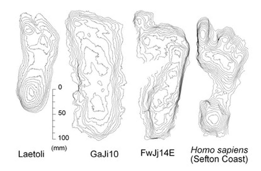 """Vasemmalla Laetolista löytynyt jälki (luultavasti Australopithecus afarensis), keskellä aiemmin löytynyt Homo erectus- jälki sekä nyt Ileretistä havaittu, oikealla Homo sapiensin jälki. Kuva: <span class=""""photographer"""">Matthew Bennet,  Bournemouthin yliopisto</span>"""