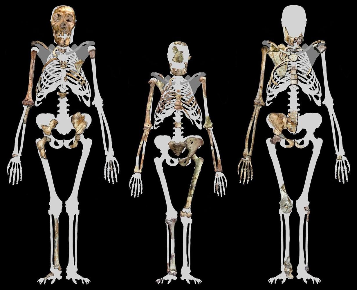 Lucyn rekonstruktio kahden Autralopitecus sediban välissä. Kuva: Peter Schmid / Lee R. Berger, University of the Witwatersrand / Wikimedia Commons
