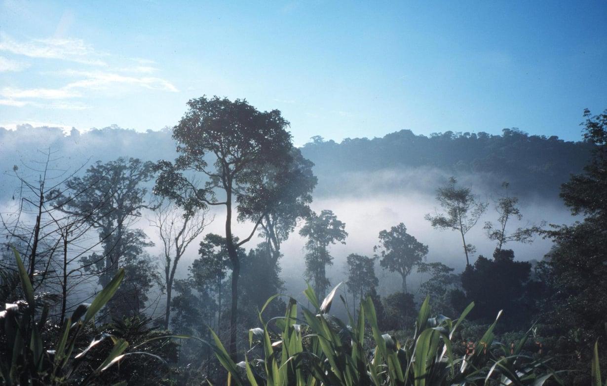 Trooppiset metsät imuroivat itseensä hiilidoksidia. Itä-Usambaran sademetsää Afrikassa. Kuva: Anne Viisteensaari