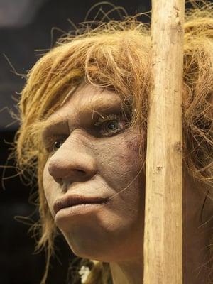 """Tältä näyttää neandertalilaisnainen Madridin arkeologisen museon hahmotelmassa. Kuva: <span class=""""photographer"""">Juan Aunion, Shutterstock</span>"""