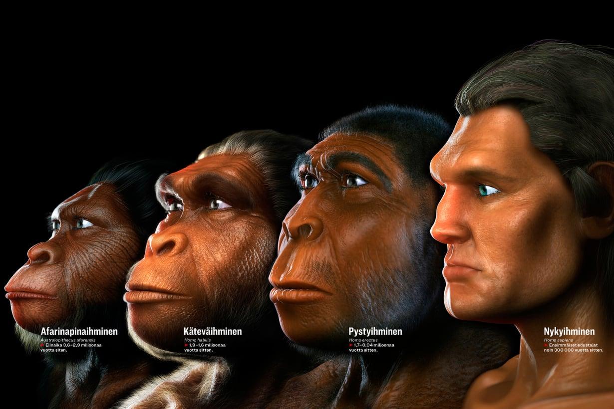 Ihmislajit pysyivät apinamaisina pitkään sen jälkeen kun sukumme Homo syntyi. Kuva: SPL/MVPhotos