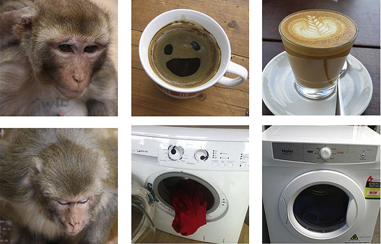 Tutkijat tarkkailivat, miten kauan apinat katsoivat kuvia toisista apinoista ja esineistä, joista osalla ihminen hahmottaisi kasvot ja osalla ei. Kuva: Current Biology