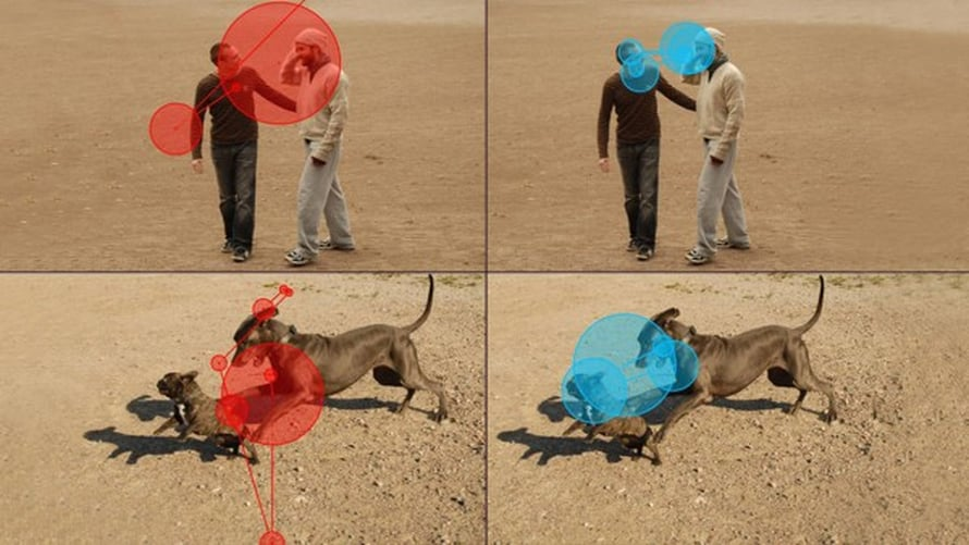 """Punainen väri kuvaa koiran silmänliikkeitä ja sininen ihmisen. Mitä isompi ympyrä, sitä pidempään silmä kohdassa viipyi. Viivat esittävät silmän liikkeitä. Kuva: <span class=""""photographer"""">Heini Törnqvist</span>"""