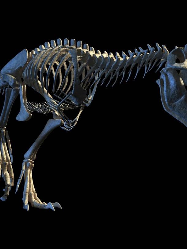 """Tietokonemallinnus Tyrannosaurus rexin luurangosta. Kuva: <span class=""""photographer"""">Leonello Calvetti / Science Photo Library</span>"""