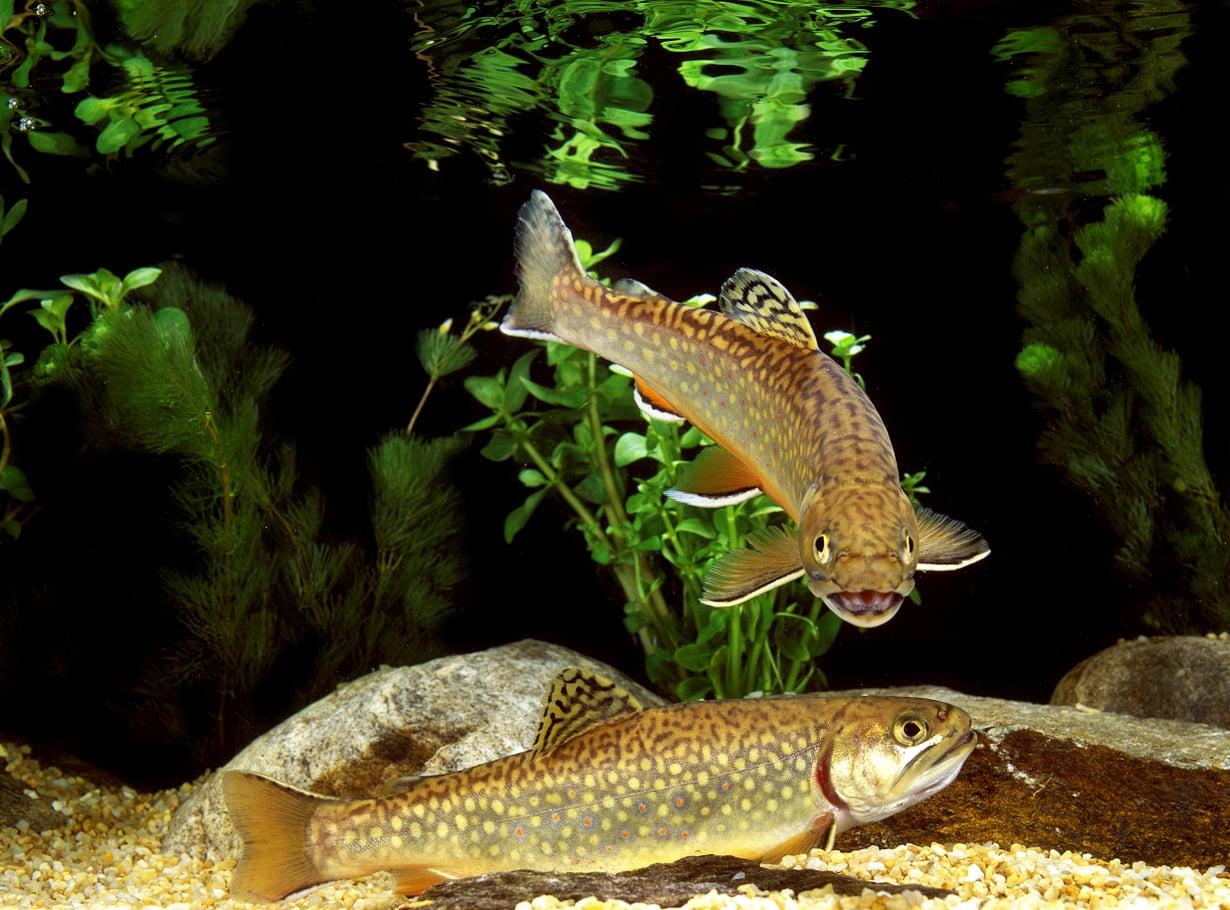 Kalat välittävät tietoa äänten ja värien lisäksi myös paineaalloilla ja hajuilla. Kuva: Getty Images