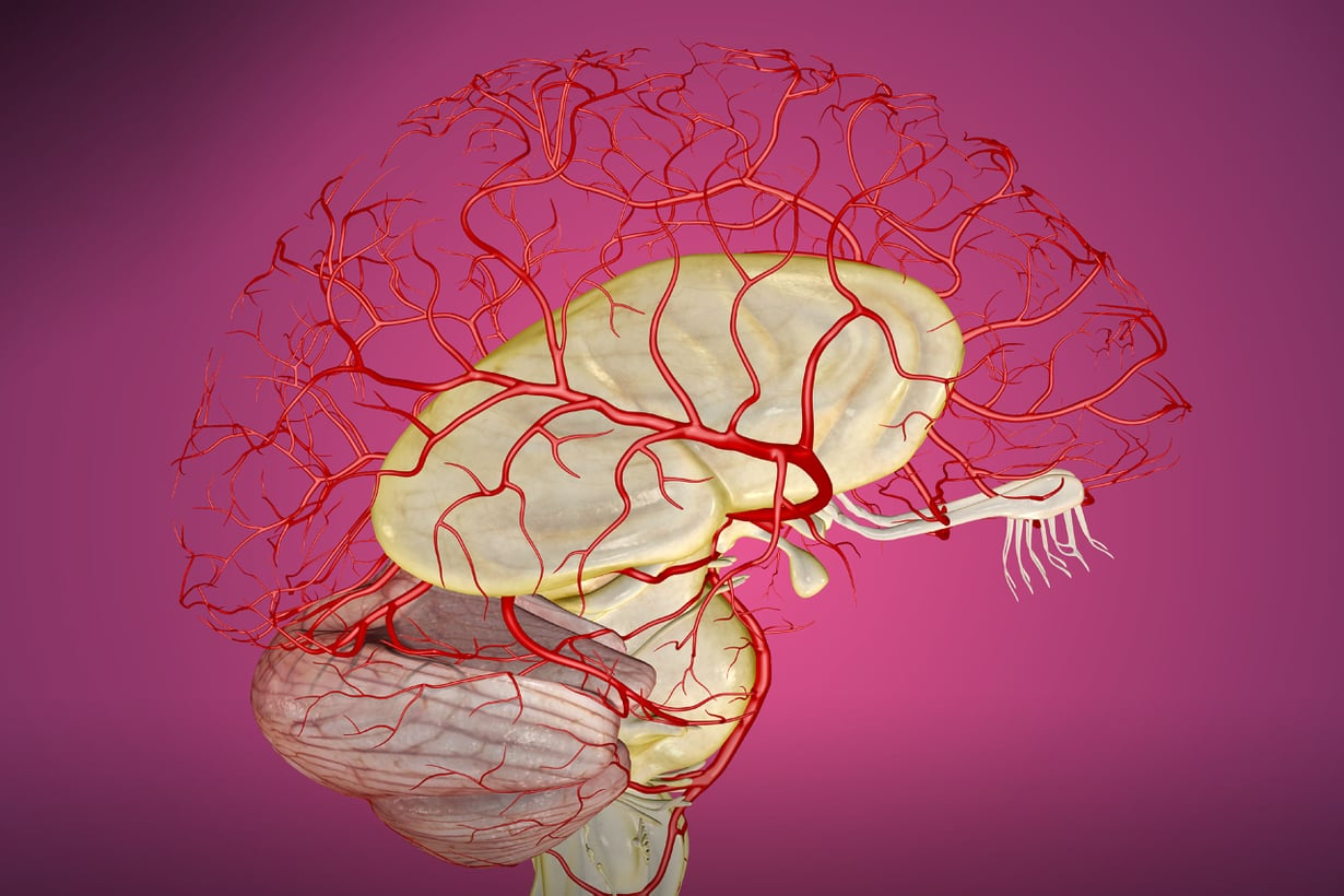 Aivojemme suojelusta vastaavat hennoimmat suonemme. Veri-aivoeste toimii valtimosuonista ohentuvissa mikroskooppisissa hiussuonissa. Kuva:SPL/MVPhotos