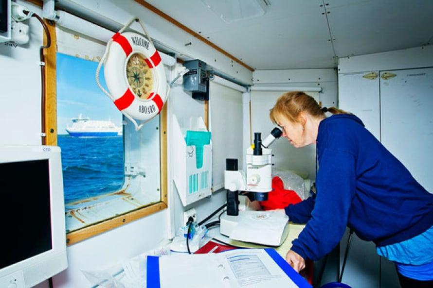 Outi Setälä mikroskopoi näytteitään Muikun laboratoriossa.