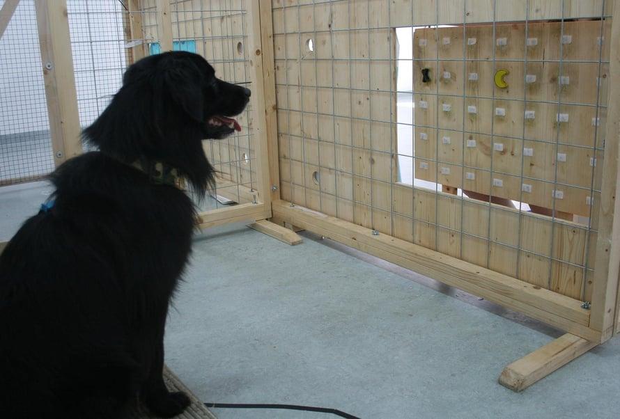 Auttaako vai eikö auta, koira ehkä miettii. Kuva: Rachel Dale/Vetmeduni Vienna