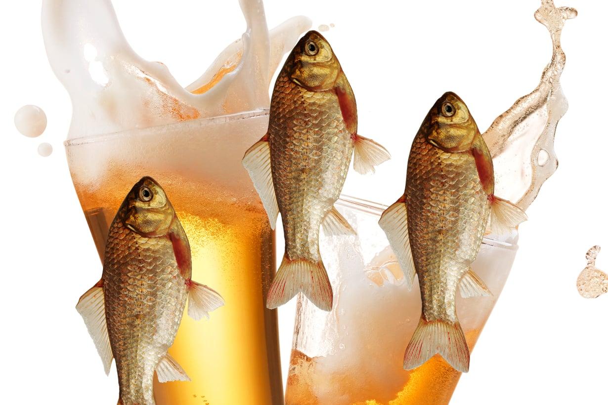Alkoholi pitää kalan hengissä. Kuva: Shutterstock