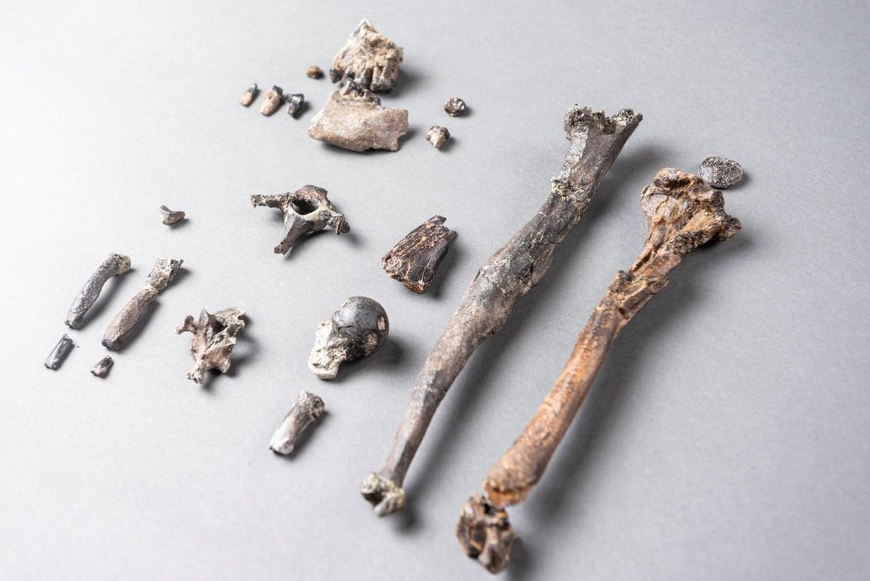 Urosapinasta on jäljellä 21 luuta. Kuva: CHRISTOPH JÄCKLE / REUTERS
