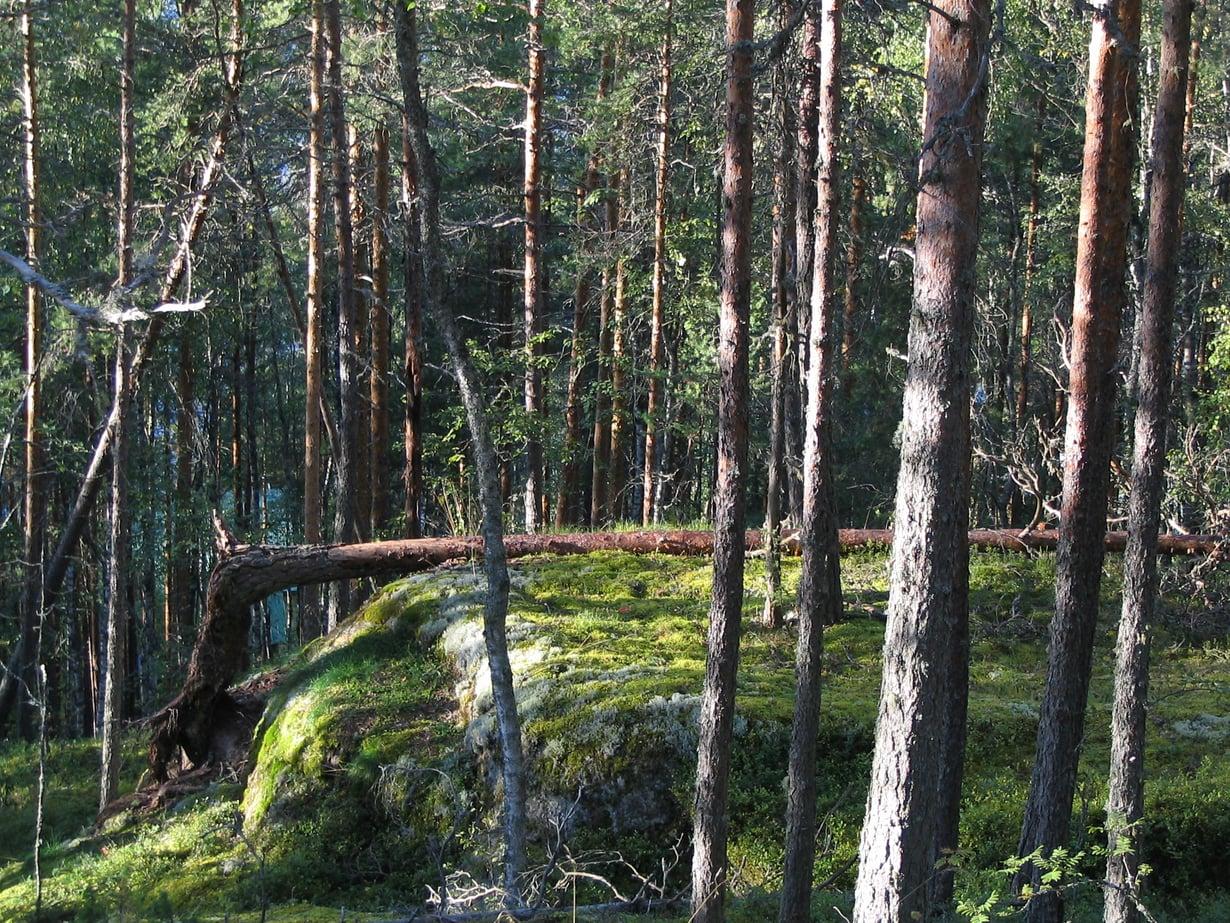 Suomalaisia hiilensitojia vieri vieressä.